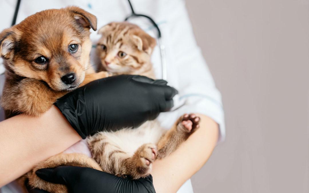 Veterinarios y Peluqueros Caninos